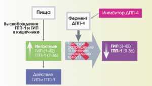Ингибиторы дипептидилпептидазы-4 (глиптины)