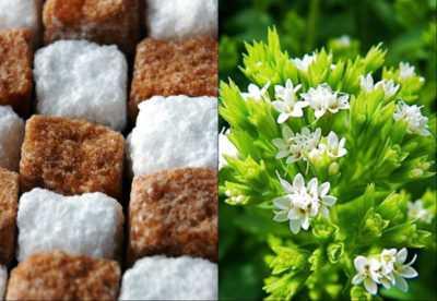 Стевия и её применение при сахарном диабете