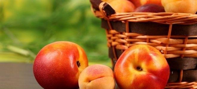 Можно ли есть персики и абрикосы при панкреатите?