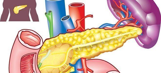 Как работает поджелудочная железа у человека?