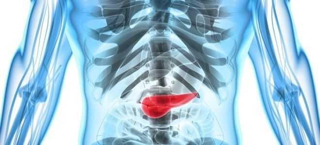 Какие виды функций выполняет поджелудочная железа?