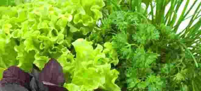 Какую зелень можно употреблять при панкреатите