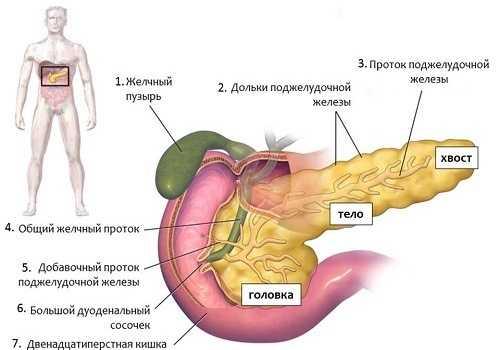 части поджелудочной железа