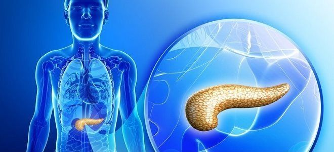 Нормальный размер поджелудочной железы по УЗИ у взрослого, патологии при отклонении показателей