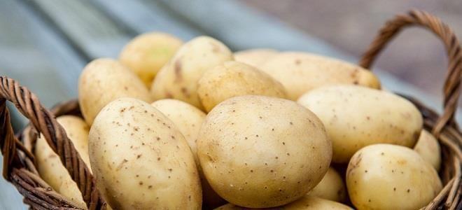 Правила употребления картофеля при панкреатите: безопасные рецепты