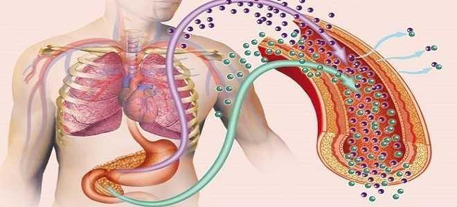 Чем лечить поджелудочную железу когда у вас сахарный диабет?