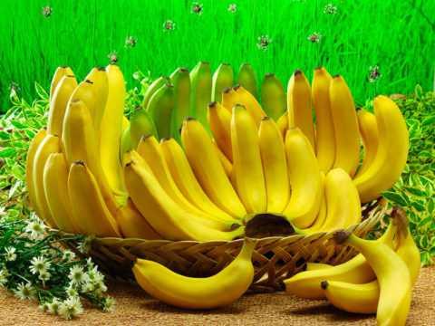 Бананы содержат много фруктозы и есть их диабетикам можно только в малых дозах.