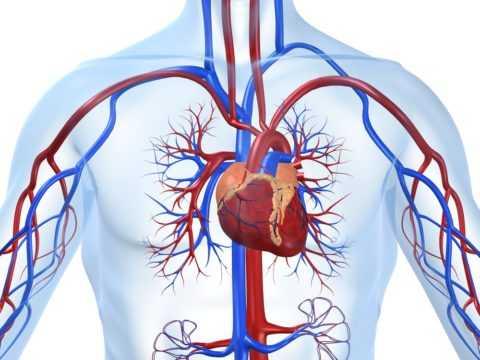 Болезни сердца и сосудов – главная причина смерти диабетических больных