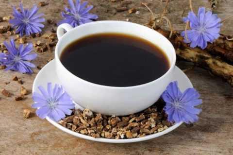 Чашка напитка из корней цикория