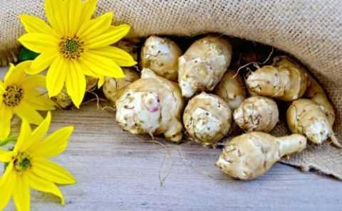 Другие названия топинамбура – корень Солнца, клубневой подсолнечник, иерусалимский артишок, китайский картофель, донская репа