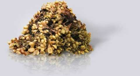 Экстракт из морских водорослей при диабете