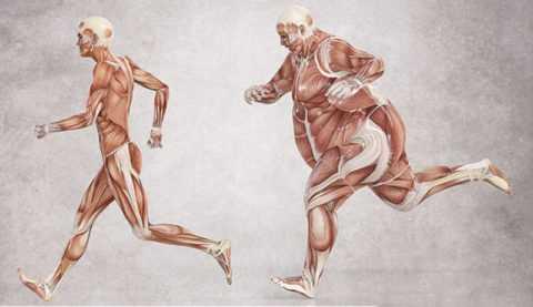 Физические нагрузки способны затормозить развитие нечувствительности к инсулину