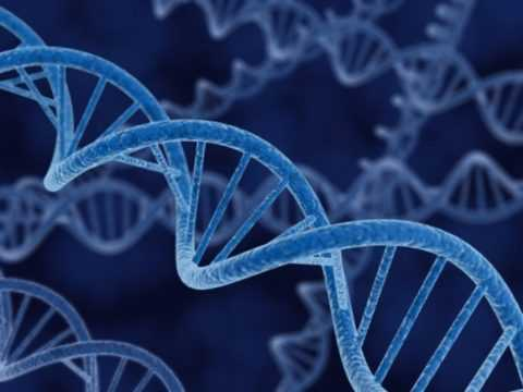 Генетика как один из факторов.