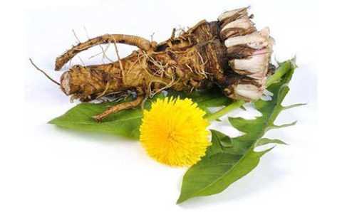 Использование корня при заболевании