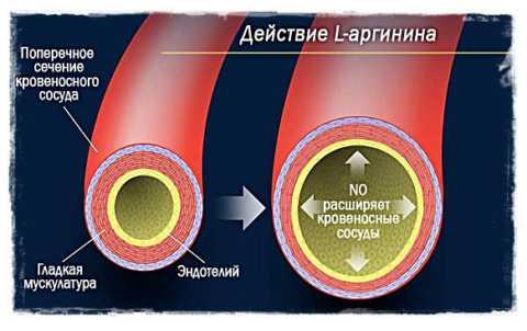 Источник для образования оксида азота – L-аргинин из рыбы, творога, орехов, белого мяса