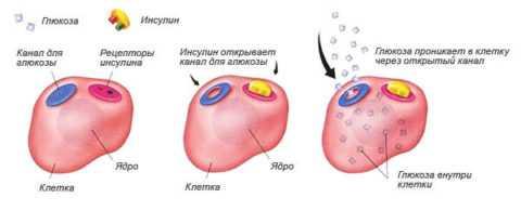 Как действуют препараты при повышенном уровне глюкозы в крови