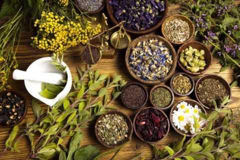 Каждый из растительных компонентов чая обладает уникальными полезными свойствами.