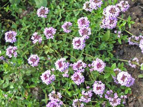 Лечебная трава при болезни