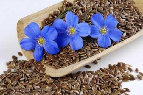 Льняное семя – уникальный дар природы для лечения множества заболеваний.