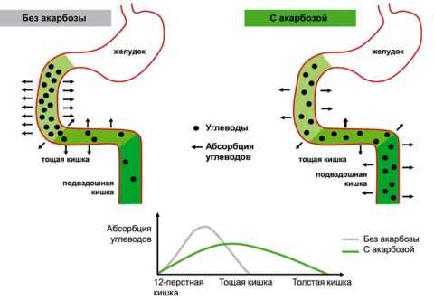 Механизм действия Акарбозы