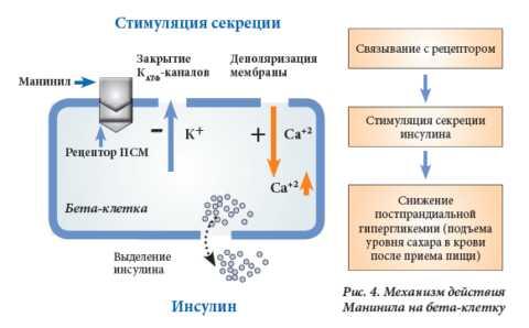 Механизм действия этих препаратов