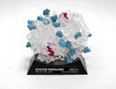 Модель молекулы гликогемоглобина
