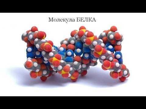 Молекула протеина