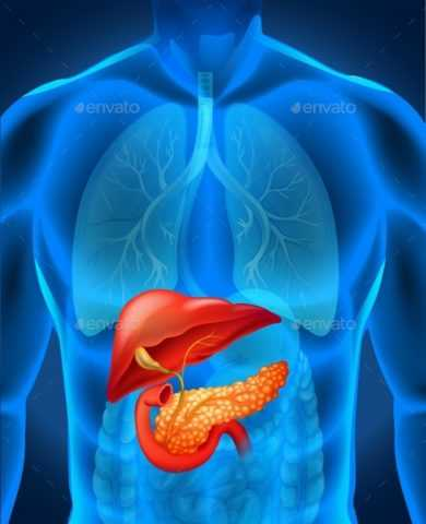 Нагрузки на клетки поджелудочной железы.