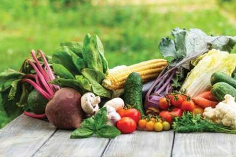 Основу рациона должны составлять овощные культуры.