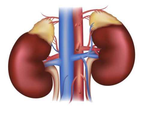 При диабете практически у каждого пациента страдают почки
