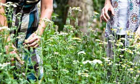 При самостоятельном сборе трав следует избегать мест вблизи автомагистралей и заводов.
