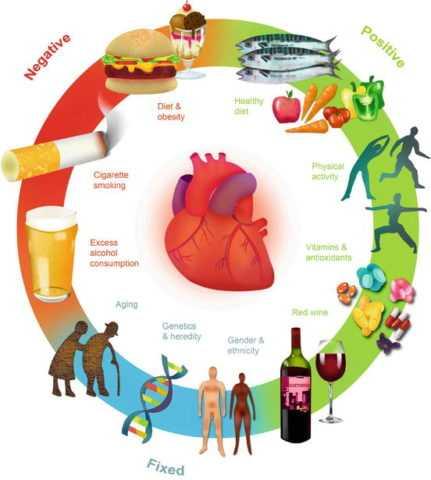 Профилактика сердечнососудистой заболеваемости среди диабетиков стоит сразу после гликемического контроля.