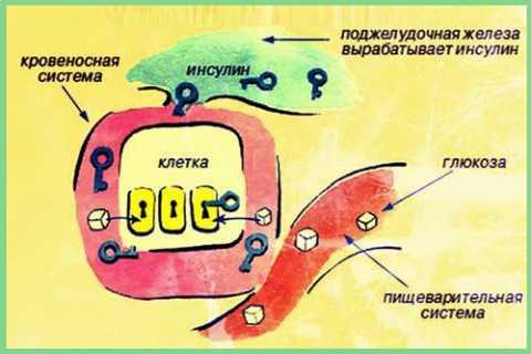 Процесс утилизации клетками тканей глюкозы из плазмы крови, нарушающийся при СД2