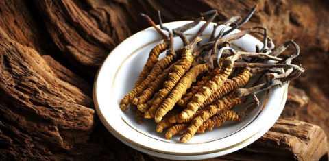 Растение – насекомое - кордицепс