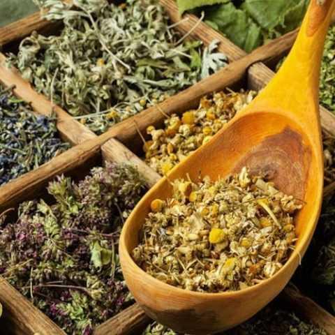 Сбор трав для лечения недугов