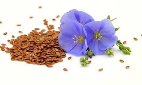 Семена, стебли и цветки льна