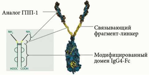 Схематическое представление молекулярной структуры дулаглутида