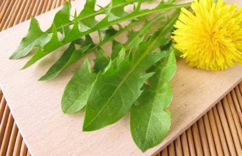 Снижает высокий инсулин в крови листья одуванчика