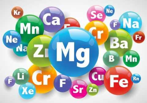 Состав дыни обогащен важными витаминами и микроэлементами, нужными для организма.