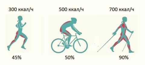 Сравнительная характеристика энергозатратности и вовлечения в работу мышечных групп