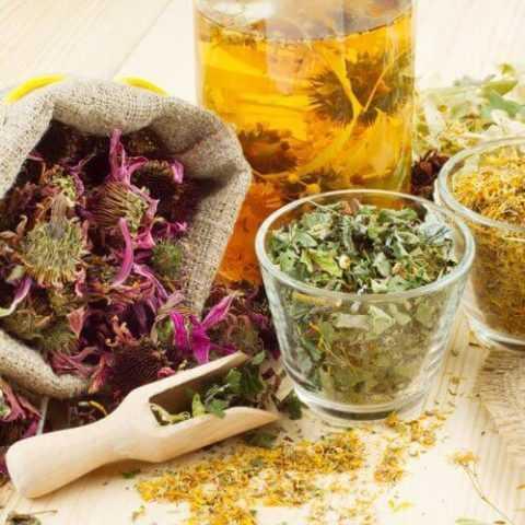 Своевременный сбор трав очень важен для народной медицины