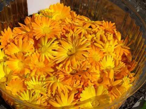 Цветки календулы для настоя