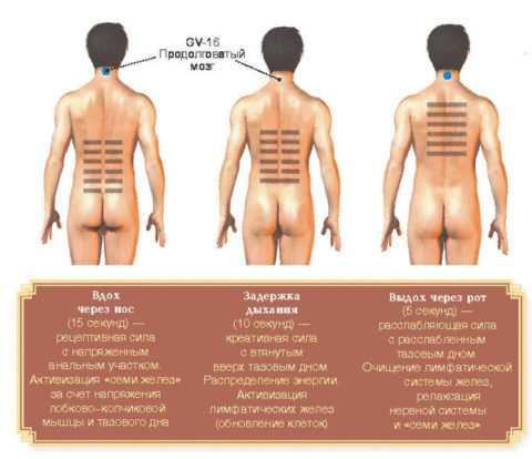 Упражнение Олень для мужчин и женщин напоминает упражнения Кегеля