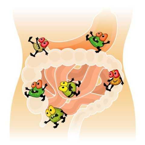 Важен прием полезных бактерий совместно с антибактериальной терапией