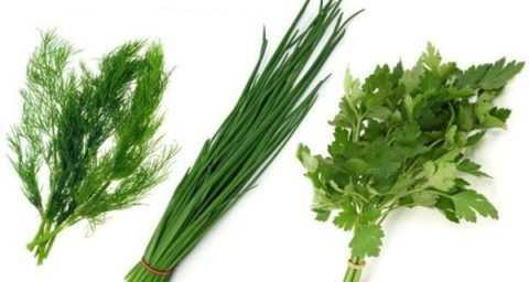 Зелень и специи в меню людей, больных диабетом