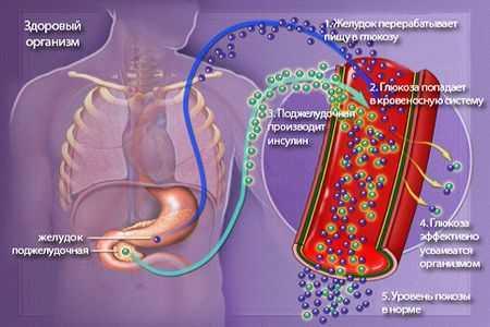схема движения инсулина в организме