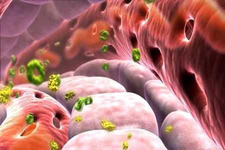 высвобождение инсулина в организме