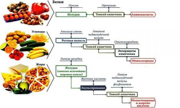 Ферменты для переваривания пищи
