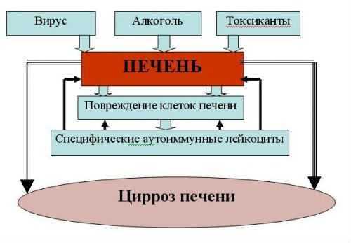 Механизм развития цирроза