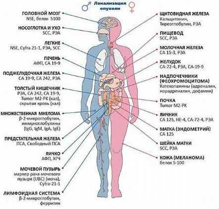 Разновидности онкомаркеров, характерных для различных органов